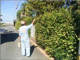 植木剪定・害虫防除